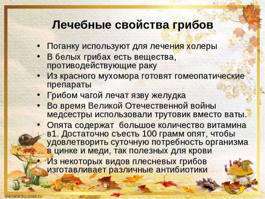 10 мифов о лесных грибах