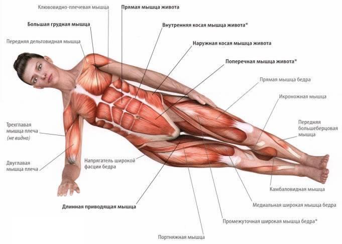 Упражнение боковая планка: как правильно выполнять, какие мышцы работают