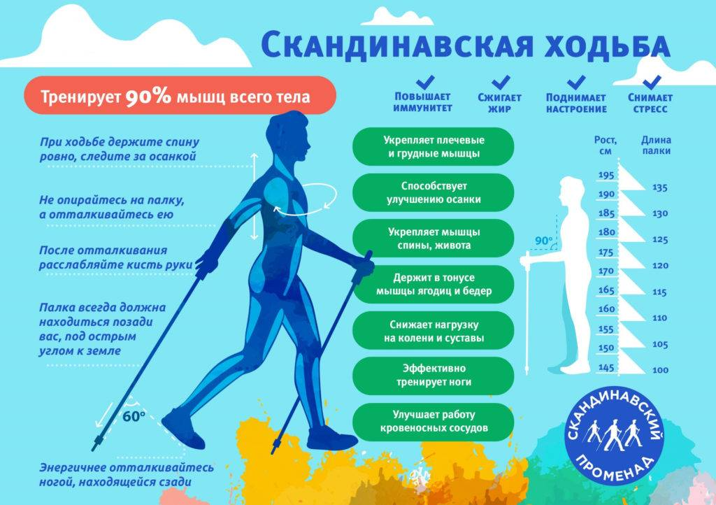 Как ходить скандинавской ходьбой? ошибки и правильный вариант. скандинавская ходьба: как правильно ходить
