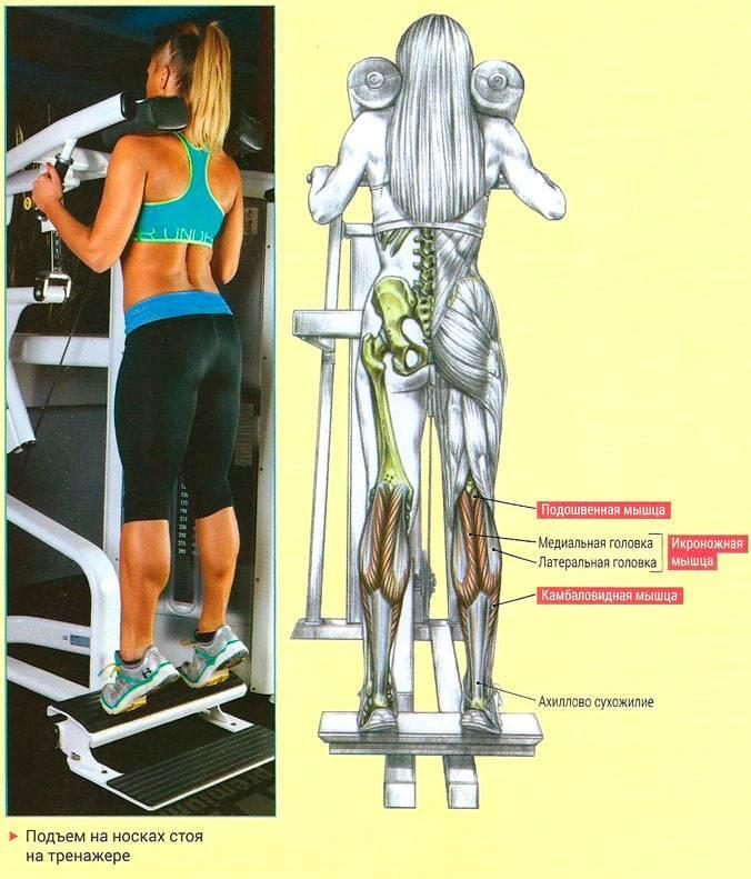 Упражнения на степпере: какие мышцы тренирует и как правильно заниматься на тренажере   rulebody.ru — правила тела