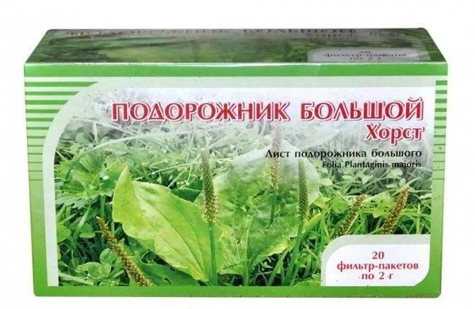 Подорожник: выращивание, свойства, применение