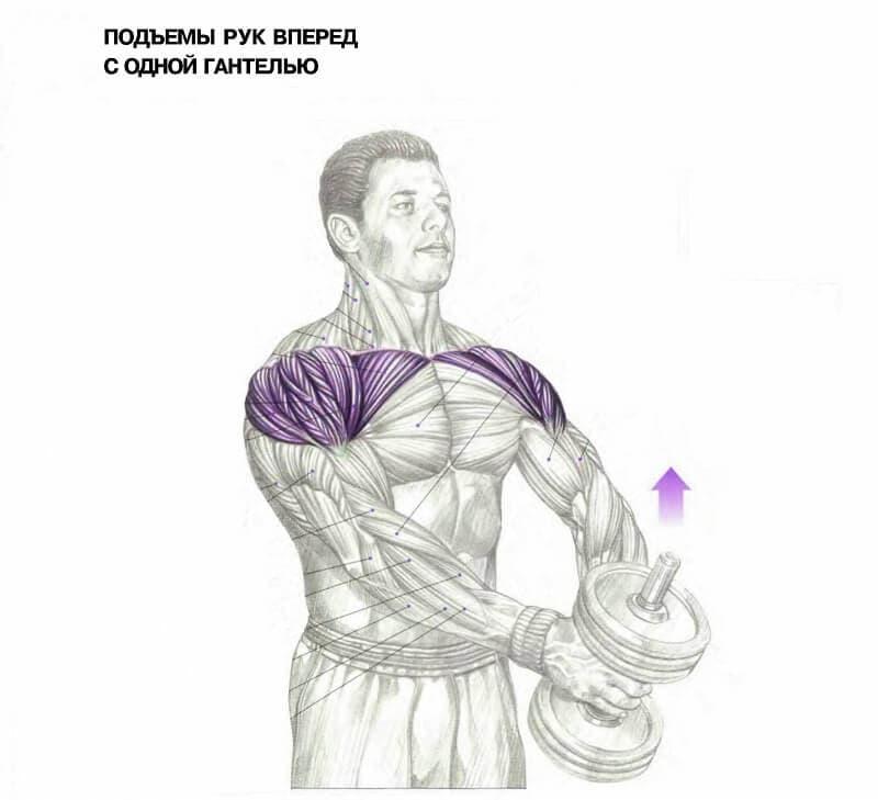 Лучшие упражнения для рук: как накачать бицепс арнольда?