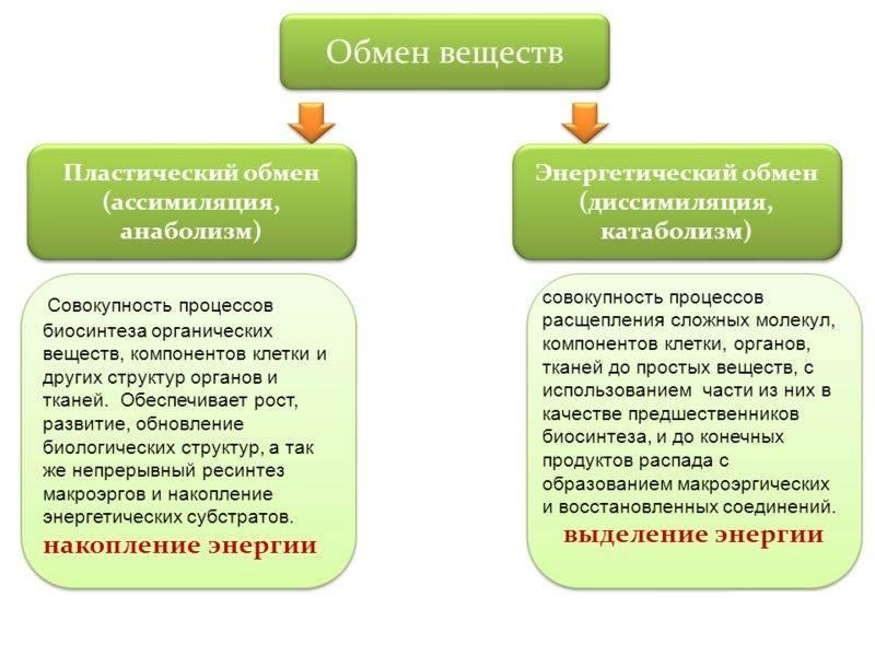 Скорость метаболизма и продолжительность жизни