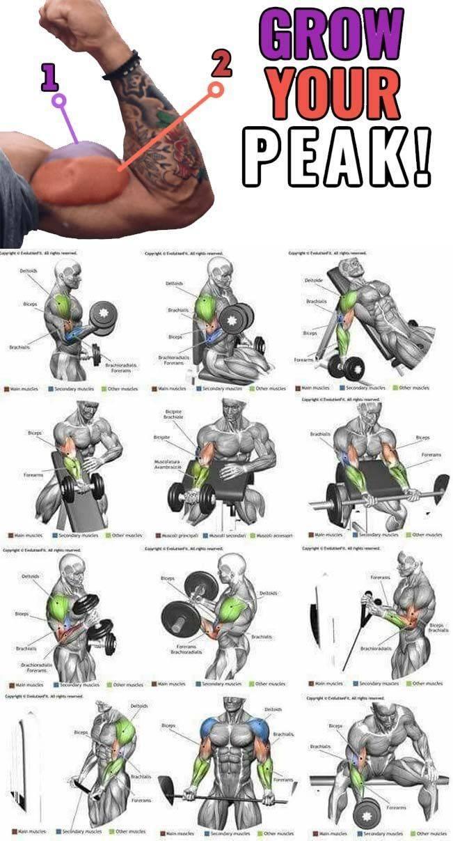 Упражнения на грудные мышцы для тренировок в тренажерном зале