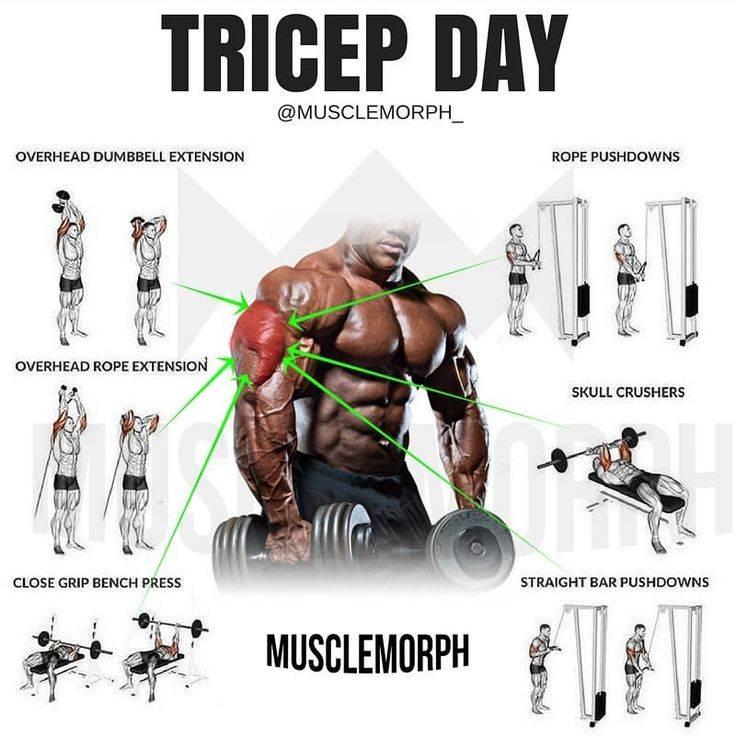 Самые эффективные упражнения на плечи для мужчин - комплекс тренировок для начинающих и опытных спортсменов. (120- фото + видео-уроки)
