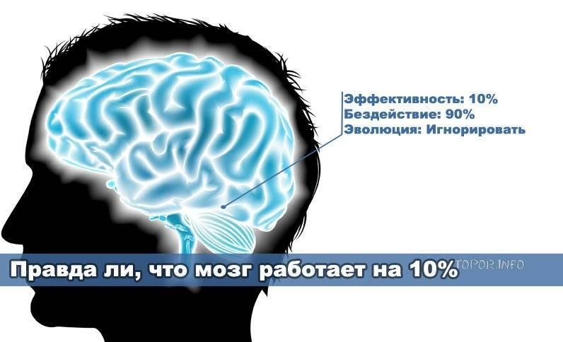 Связь «мозг-мышцы»: как заставить свои мышцы работать