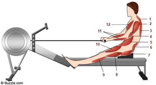 Главное о гребном тренажере 8 тренировок
