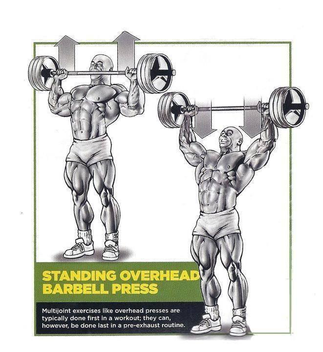 Упражнения на плечи для мужчин в тренажерном зале: программа тренировки