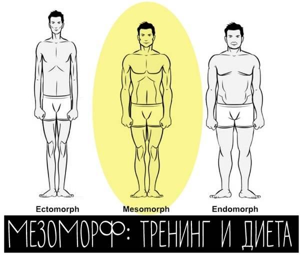 Мезоморф как определить программу тренировок и питание