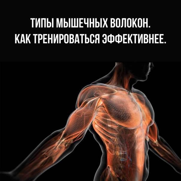 5 лучших добавок для быстрого роста мышц