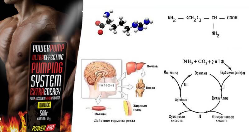 Гликоген для набора массы и сжигания жира