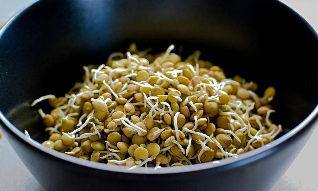 Ростки сои: польза и вред пророщенных соевых бобов
