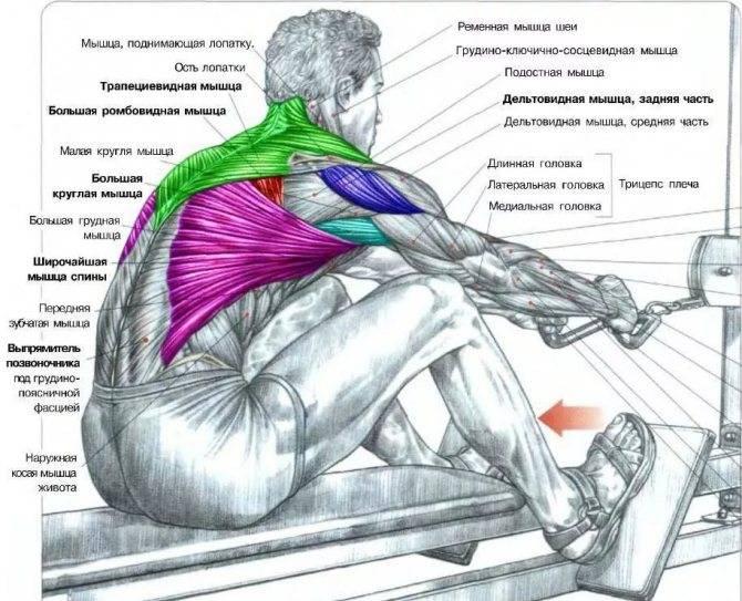 Как накачать спину в домашних условиях: все способы с железом и без