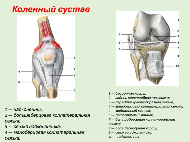 Восстановление связок коленного сустава