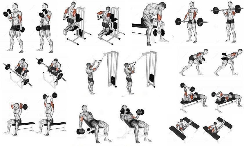 Порядок выполнения упражнений в тренажёрном зале