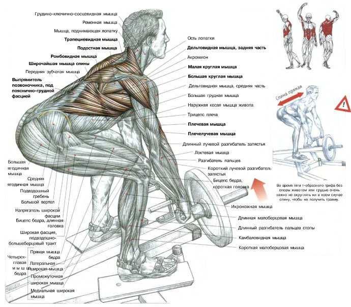 Программа тренировок на спину: готовый сплит на 7 дней + советы как накачать широкую спину (схемы и фото)