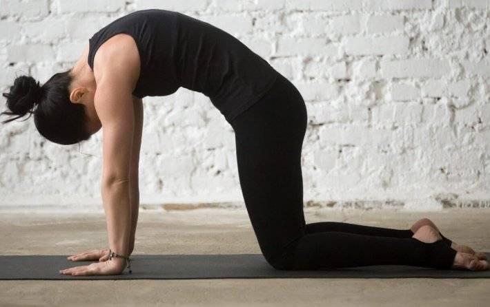 Собака мордой вверх (урдхва мукха шванасана): техника выполнения йога асаны, фото, видео