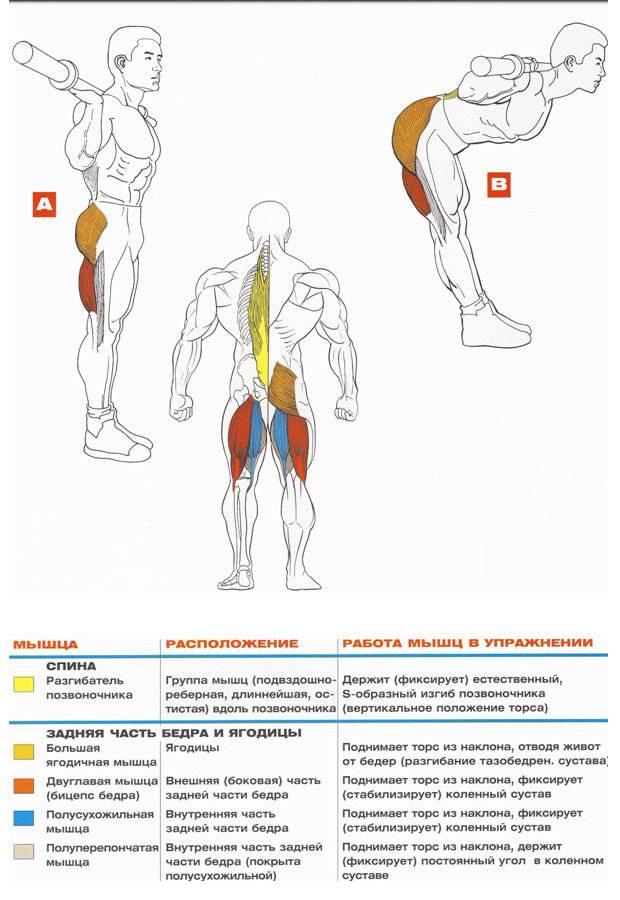 Упражнение маятник наклоны в сторону с отягощением