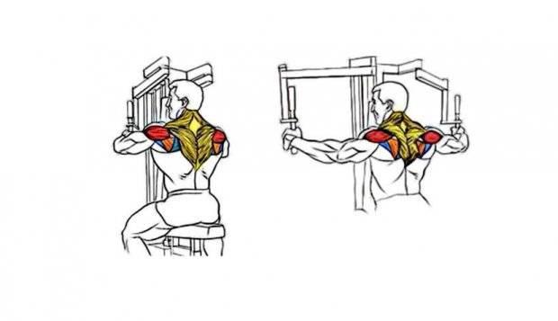 Сведение рук в тренажере - пошаговая техника выполнения