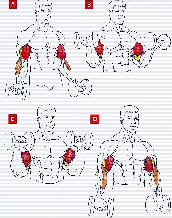 Как накачать предплечья: перечень упражнений, особенности выполнения, фото