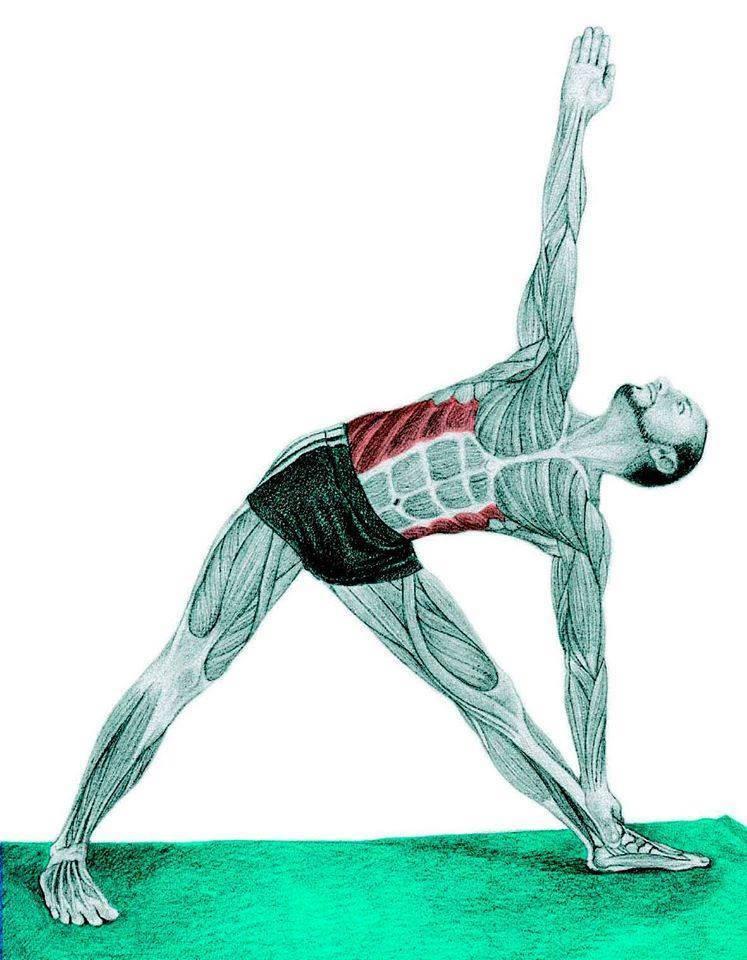 Упражнение мельница » fitbody — здоровый образ жизни человека! зож