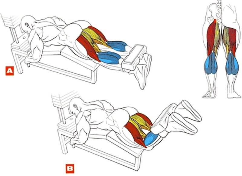Базовые и изолирующие упражнения для мышц ног