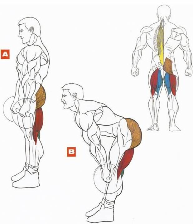 Мёртвая тяга со штангой! крутое упражнение для развития бицепса бедра