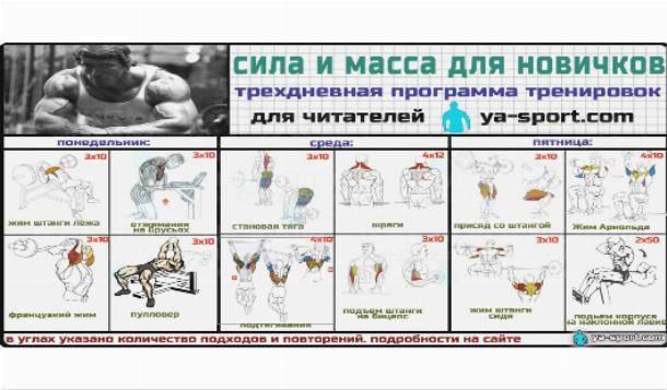 Программа тренировок для начинающих: 2 комплекса упражнения для новичков в тренажерном зале и в домашних условиях