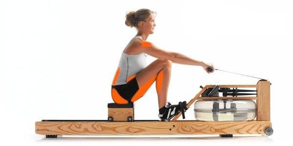 Гребля на гребном тренажере — техника упражнения. какие мышцы работают?