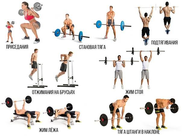 Базовые упражнения на все группы мышц - trainingbody