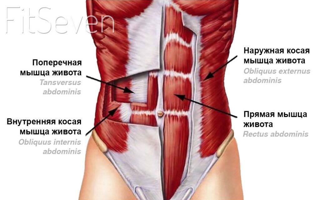 Анатомия тазового дна | kinesiopro