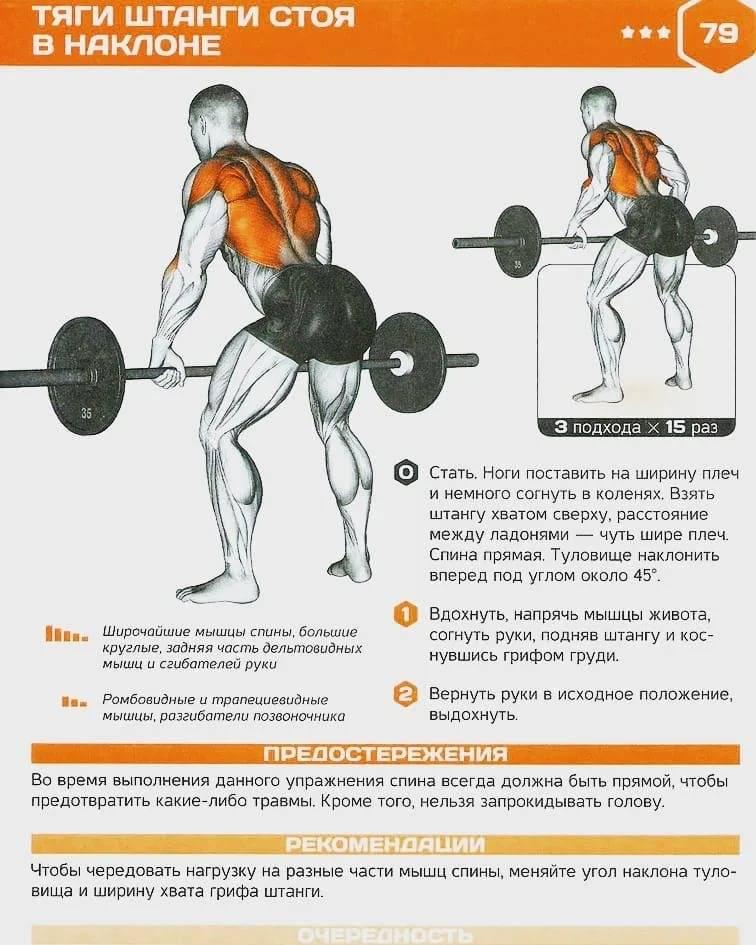 Упражнения для красивой спины или как накачать широкую спину