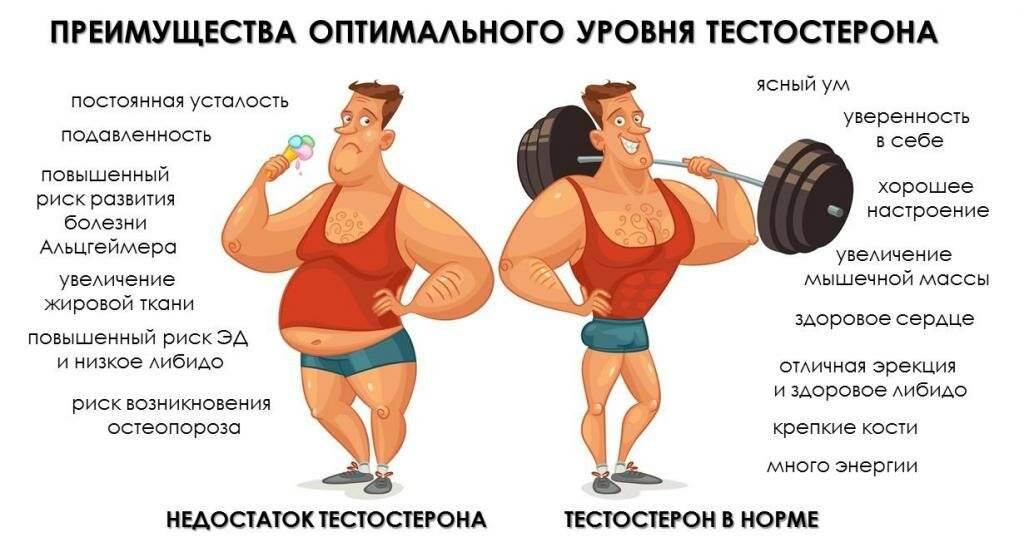 Как повысить тестостерон у мужчин естественным образом: травы, продукты, спорт