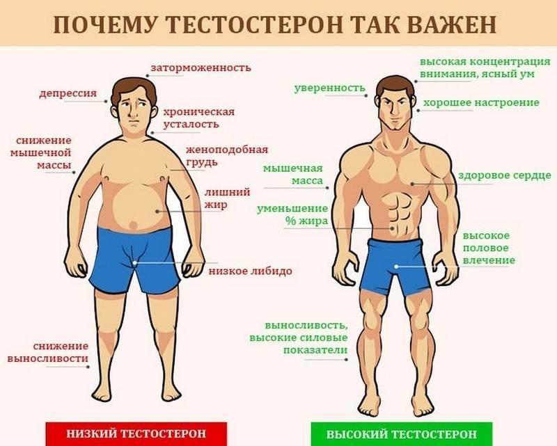 Уровень тестостерона у мужчин: в норме, повышенный и пониженный – как повысить тестостерон - сибирский медицинский портал
