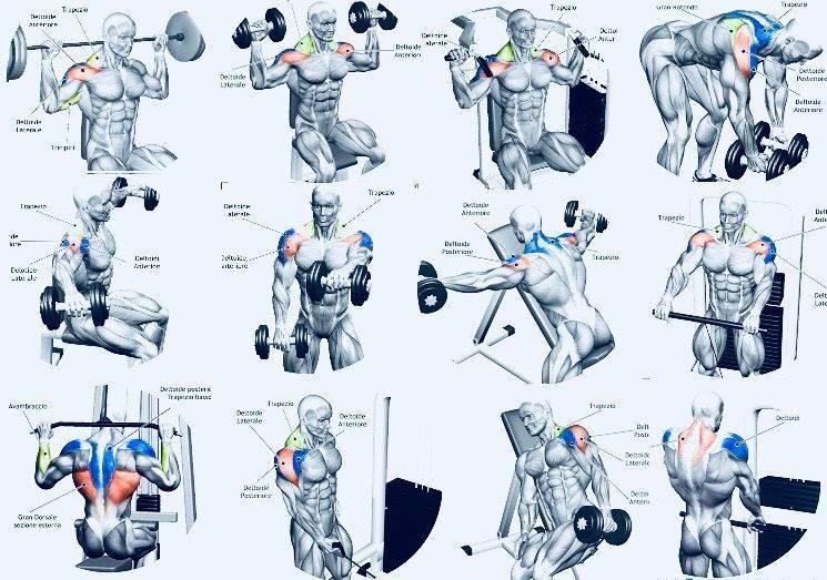 5 лучших упражнений на плечи в тренажерном зале и дома