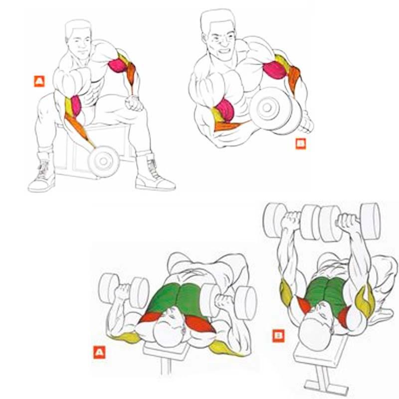 5 лучших упражнения на бицепс для увеличения массы и объема!