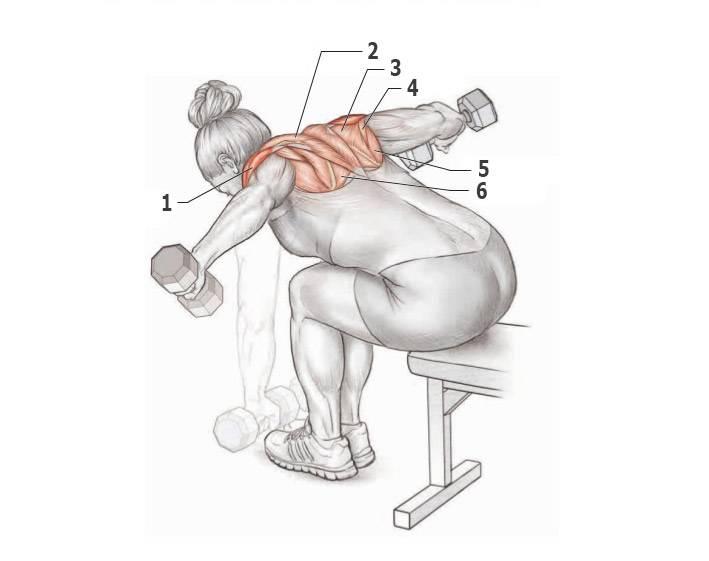Упражнения для накачивания спины в домашних условиях: как качать широчайшие и другие мышцы дома с гантелями и без снарядов