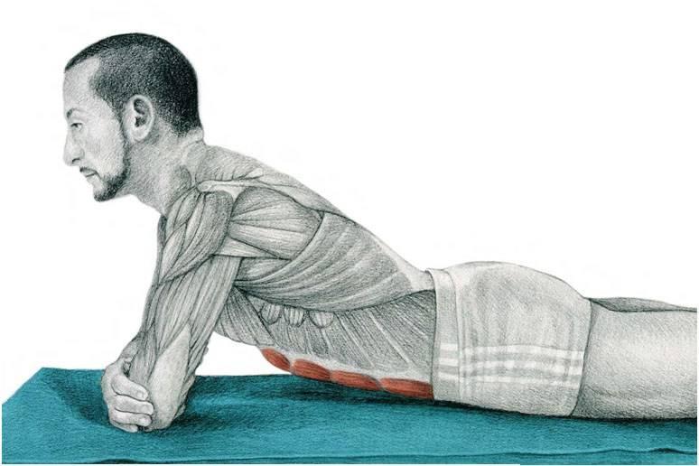 Упражнения для растяжки мышц: подробное описание