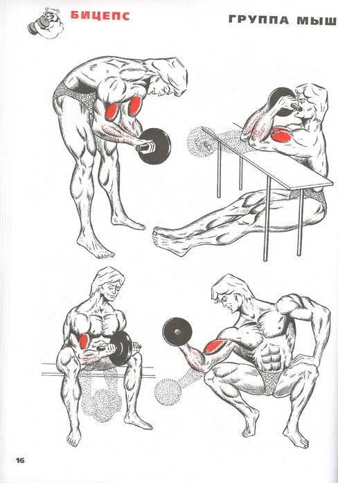 Программа тренировок для натурала на массу в тренажерном зале