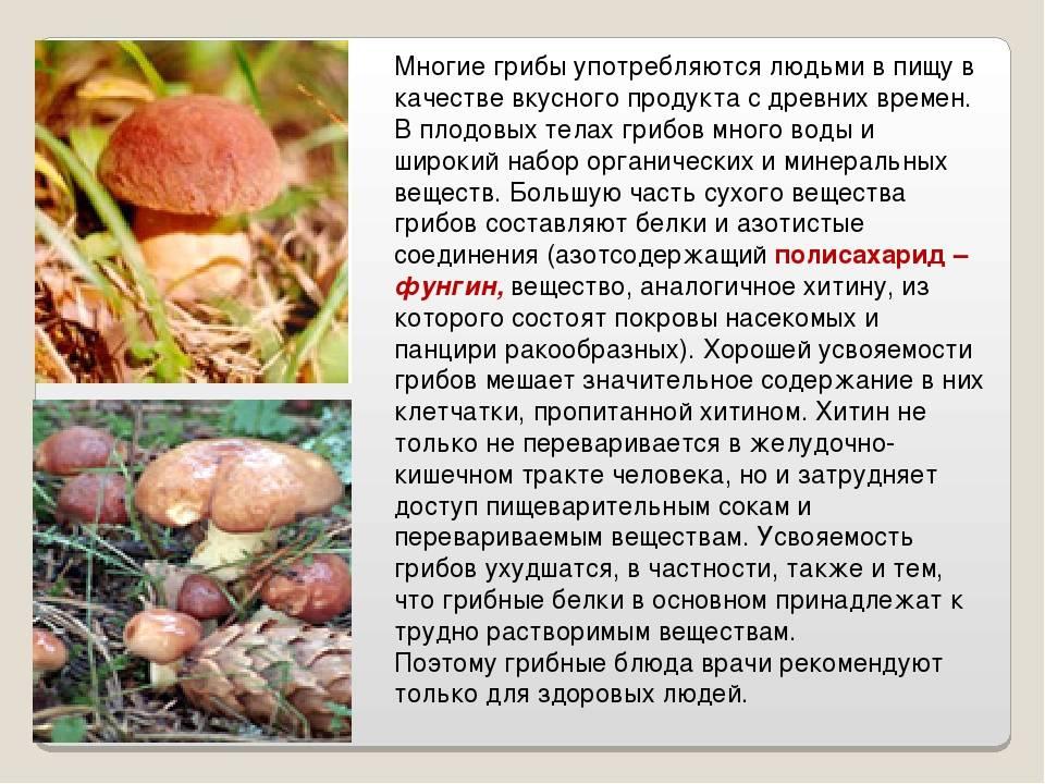 Сколько перевариваются грибы в организме человека?