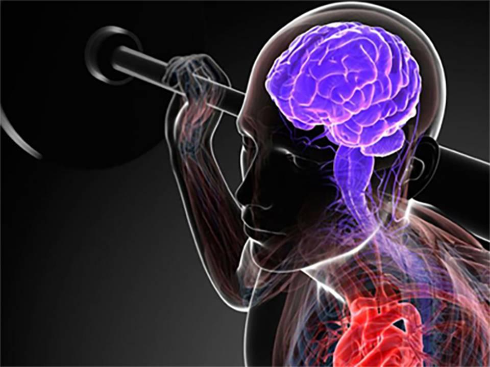 Связь мышц с мозгом - блог о спорте osporte
