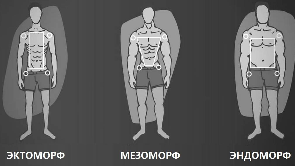 Эктоморф: как правильно питаться, программа тренировок, советы по спортпиту