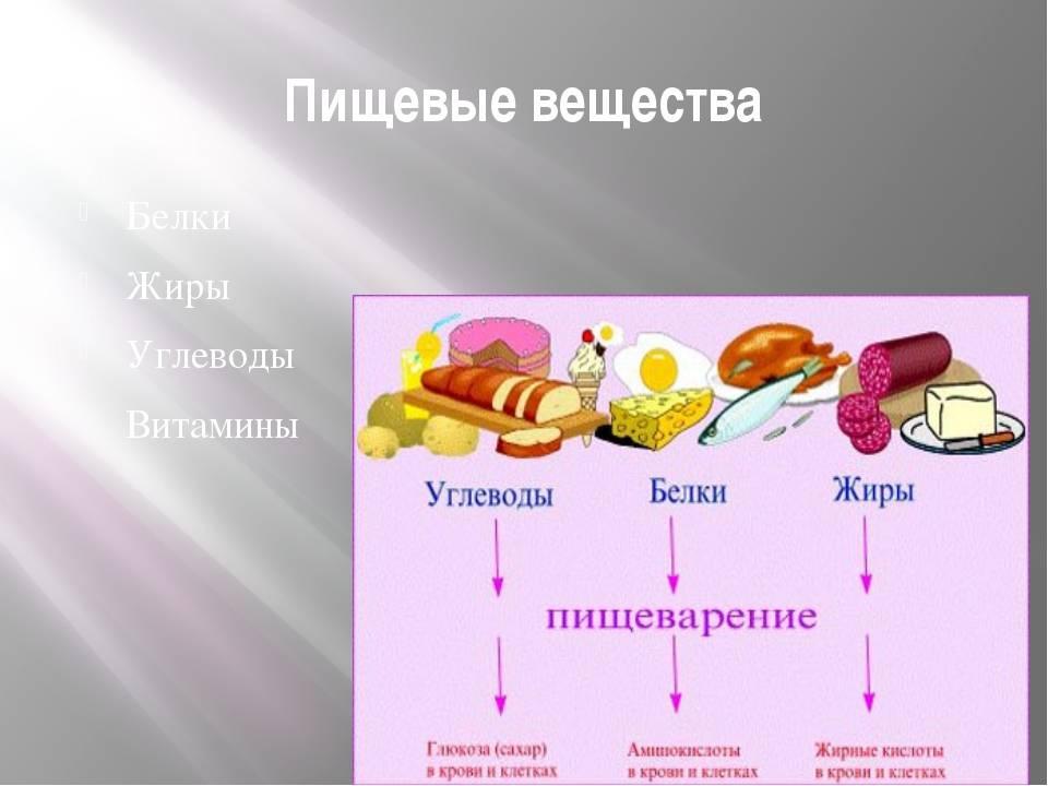 Раздел i. основы питания здорового и больного человека (б. л. смолянский)