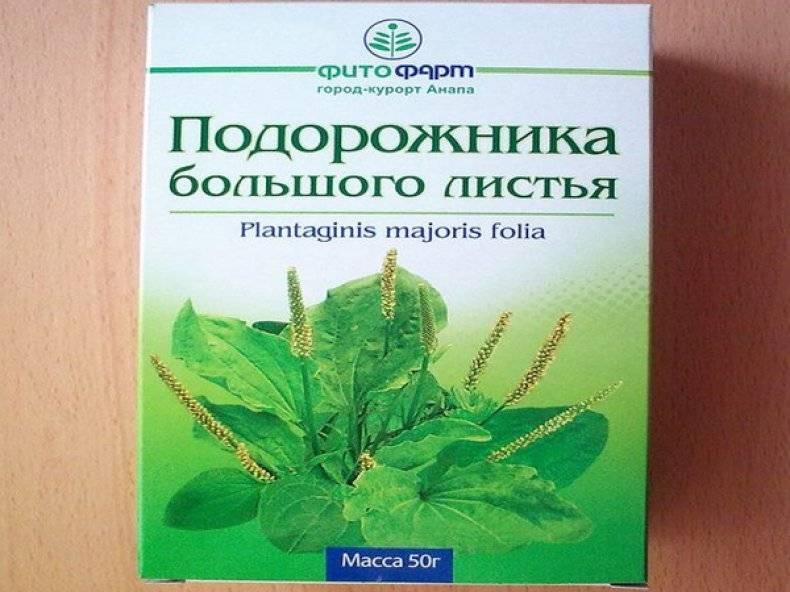 Подорожник: лечебные свойства, применение в народной медицине, рецепты, противопоказания