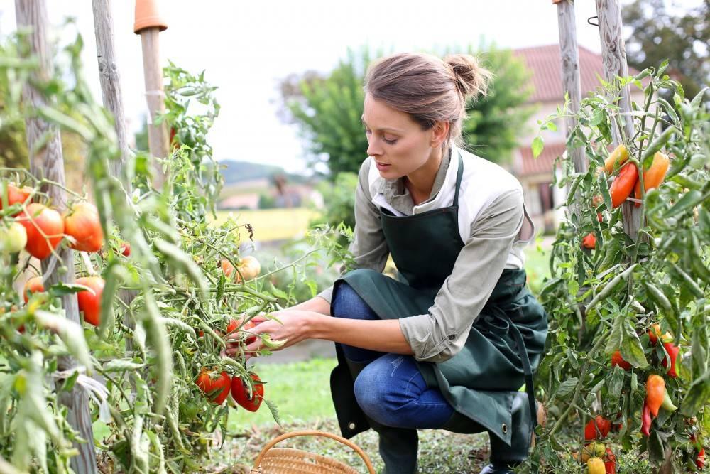 Вредные позы во время работы на огороде | огородники