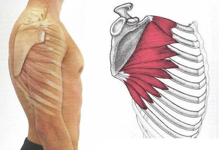 Упражнения для большеберцовой передней мышцы в домашних условиях для мужчин - kak-nakachat.pro