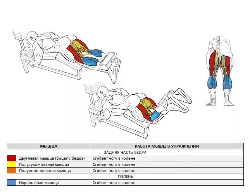 О технике упражнений для тренировки бицепса бедра
