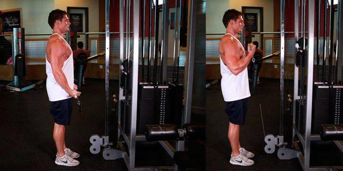 Сгибание рук со штангой стоя: полный обзор упражнения   rulebody.ru — правила тела