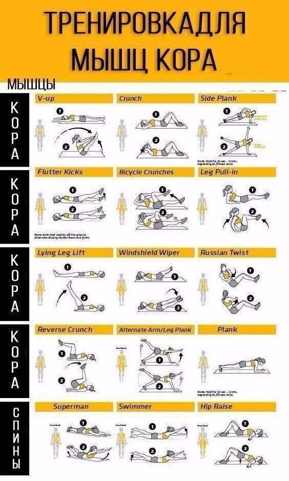 Мышцы кора. упражнения для тренировки и укрепления мышц кора