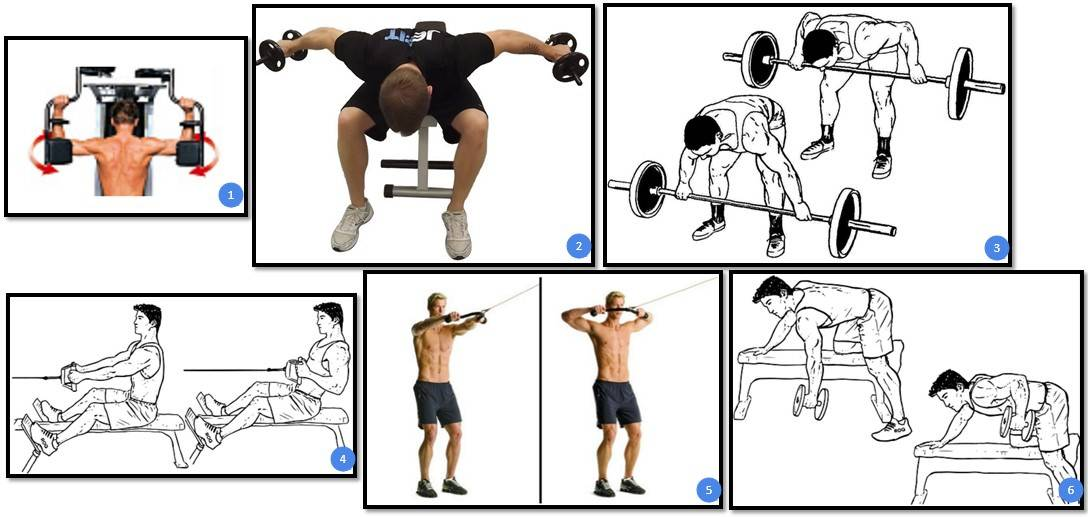 Упражнения на трапецию в домашних условиях и в тренажерном зале